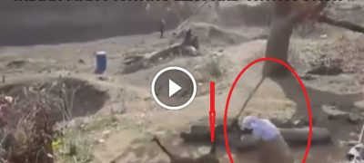 Shocking Video This Man Fighting A Leopard With A Stick