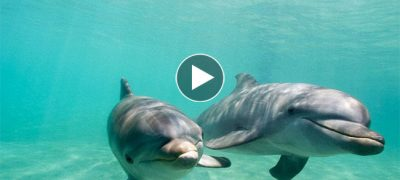 Watch These Two Dolphins Speaks to Each Other
