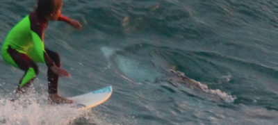 Surfer catches great white shark on camera