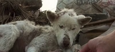 Homeless Dog Living in a Trash Pile Gets Rescuedand Received More Than It Had Bargained For At the Forever Home