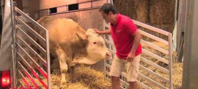 Cow rescue video goes viral, Cow Literally Dances For Joy